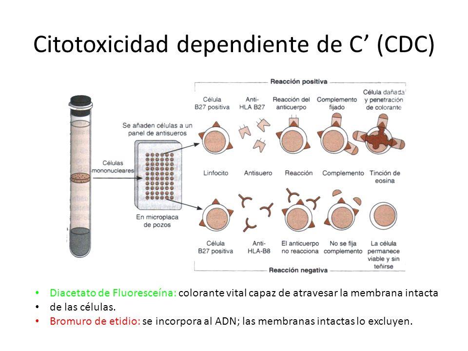 Citotoxicidad dependiente de C (CDC) Diacetato de Fluoresceína: colorante vital capaz de atravesar la membrana intacta de las células. Bromuro de etid