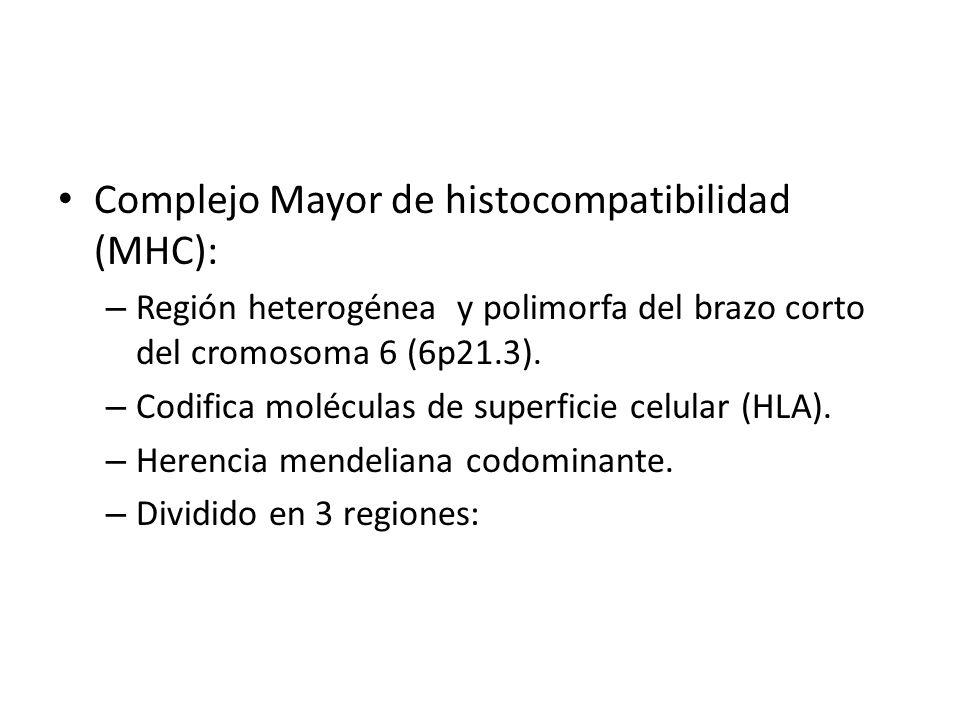 Complejo Mayor de histocompatibilidad (MHC): – Región heterogénea y polimorfa del brazo corto del cromosoma 6 (6p21.3). – Codifica moléculas de superf