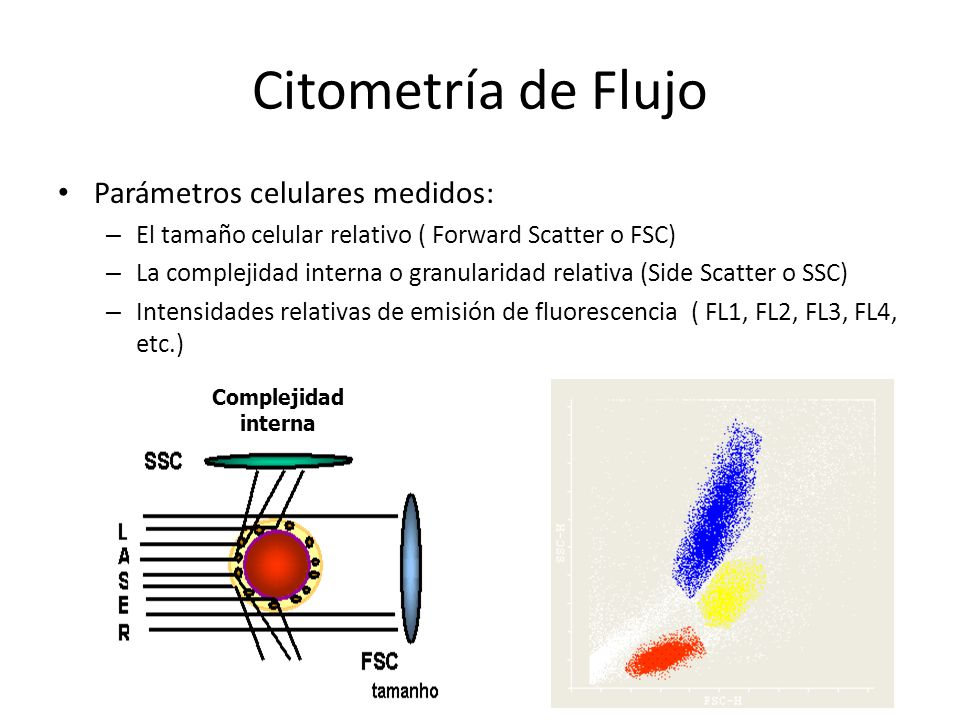 Citometría de Flujo Parámetros celulares medidos: – El tamaño celular relativo ( Forward Scatter o FSC) – La complejidad interna o granularidad relati