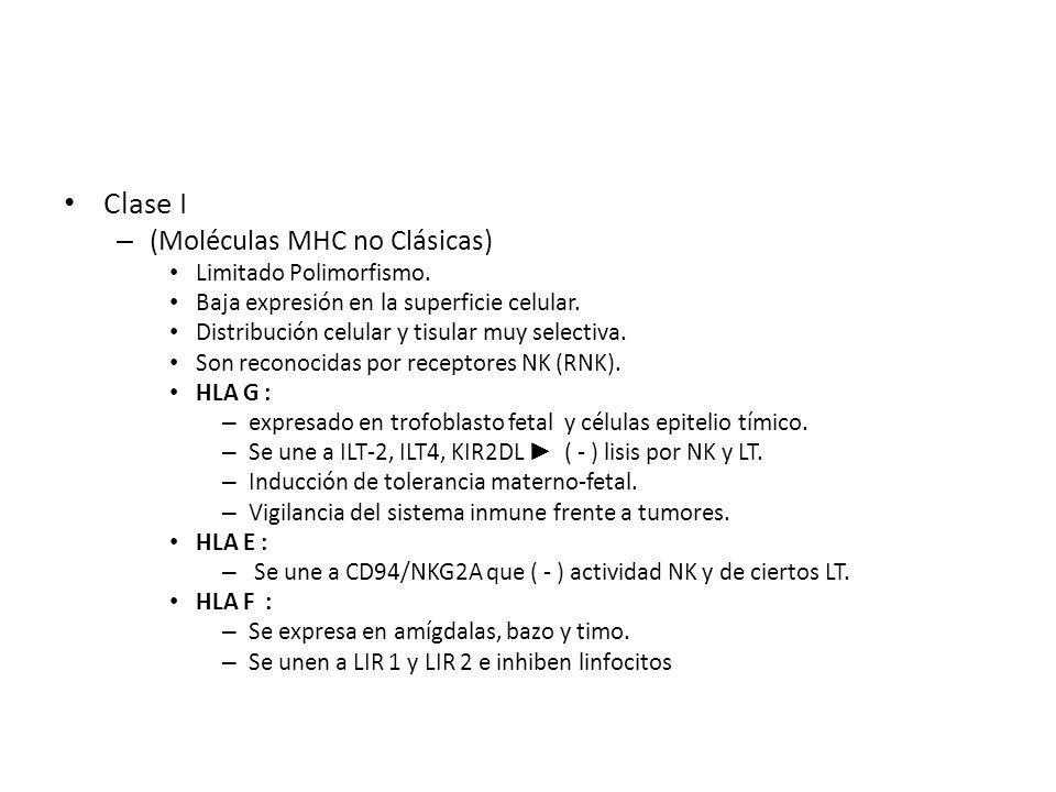 Clase I – (Moléculas MHC no Clásicas) Limitado Polimorfismo. Baja expresión en la superficie celular. Distribución celular y tisular muy selectiva. So