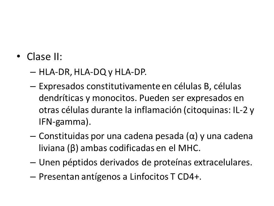 Clase II: – HLA-DR, HLA-DQ y HLA-DP. – Expresados constitutivamente en células B, células dendríticas y monocitos. Pueden ser expresados en otras célu