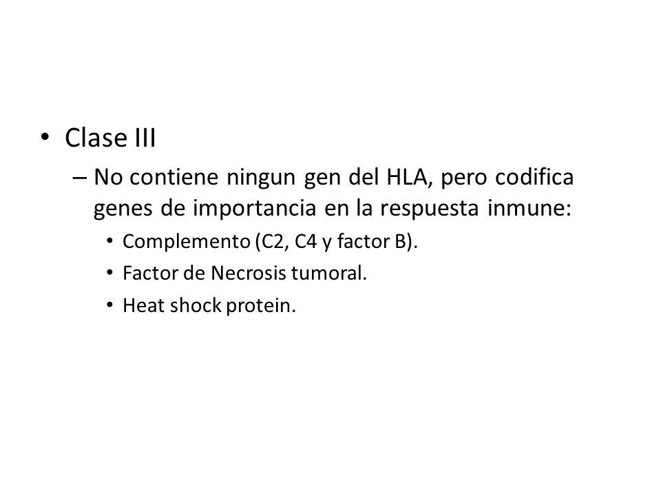 Clase III – No contiene ningun gen del HLA, pero codifica genes de importancia en la respuesta inmune: Complemento (C2, C4 y factor B). Factor de Necr