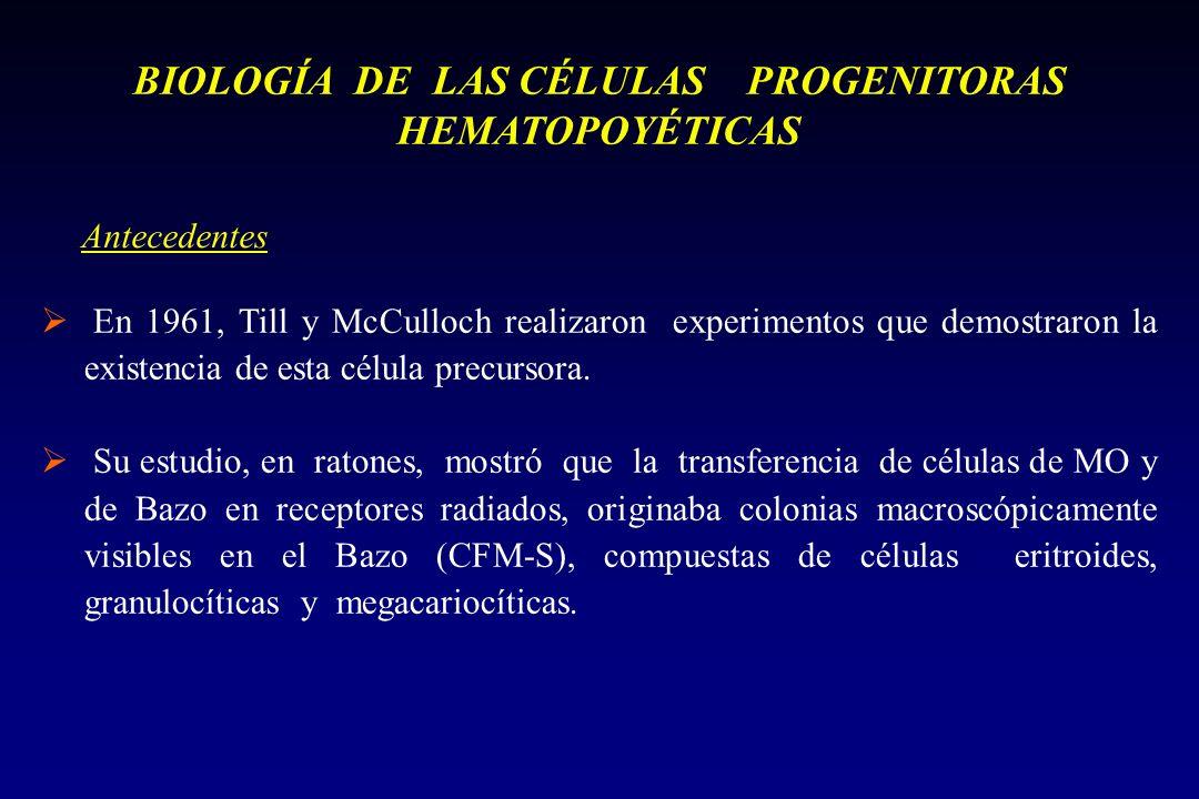 En 1961, Till y McCulloch realizaron experimentos que demostraron la existencia de esta célula precursora.