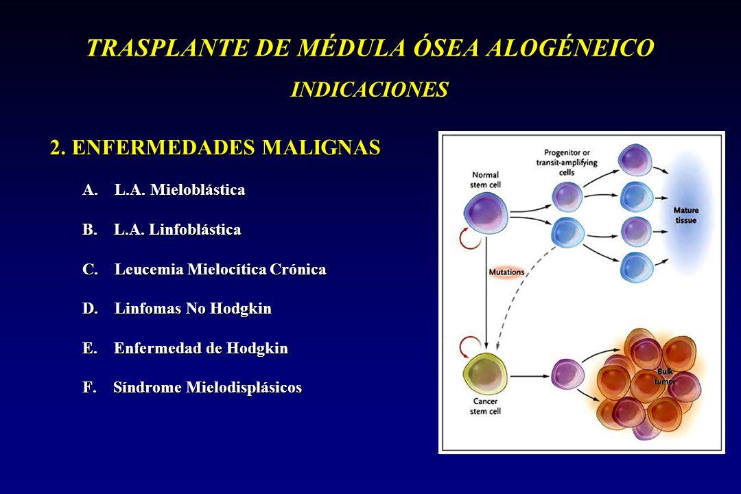TRASPLANTE DE MÉDULA ÓSEA ALOGÉNEICO INDICACIONES 2. ENFERMEDADES MALIGNAS A. L.A. Mieloblástica B. L.A. Linfoblástica C. Leucemia Mielocítica Crónica