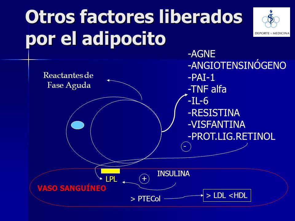 Otros factores liberados por el adipocito -AGNE -ANGIOTENSINÓGENO -PAI-1 -TNF alfa -IL-6 -RESISTINA -VISFANTINA -PROT.LIG.RETINOL LPL INSULINA + - > P