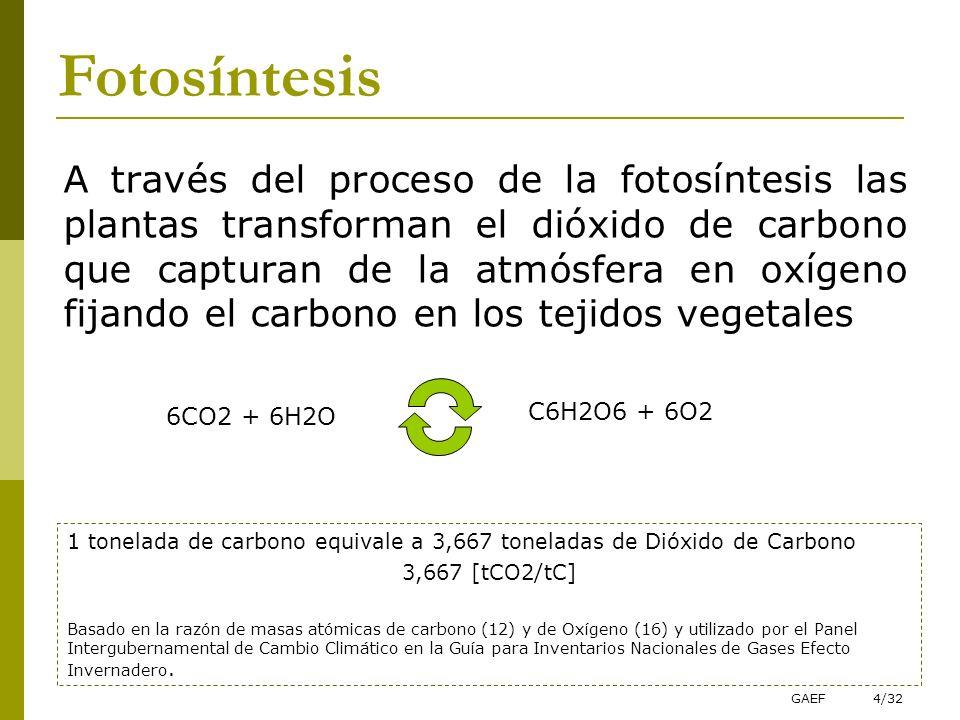 GAEF4/32 A través del proceso de la fotosíntesis las plantas transforman el dióxido de carbono que capturan de la atmósfera en oxígeno fijando el carb