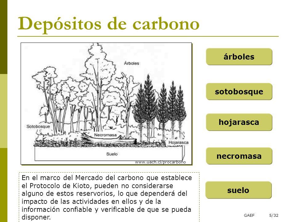 GAEF5/32 Depósitos de carbono árboles sotobosque hojarasca necromasa suelo En el marco del Mercado del carbono que establece el Protocolo de Kioto, pu