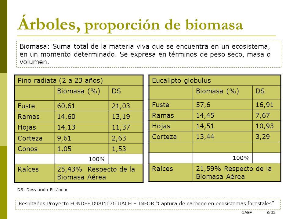 GAEF8/32 Árboles, proporción de biomasa Pino radiata (2 a 23 años) Biomasa (%)DS Fuste60,6121,03 Ramas14,6013,19 Hojas14,1311,37 Corteza9,612,63 Conos