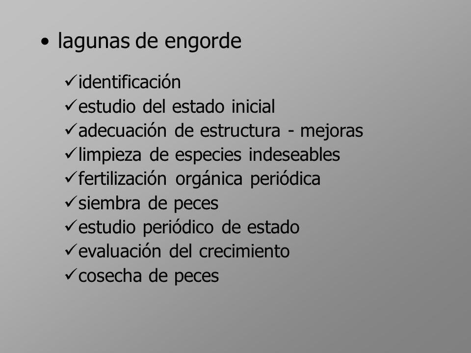 lagunas de engorde identificación estudio del estado inicial adecuación de estructura - mejoras limpieza de especies indeseables fertilización orgánic