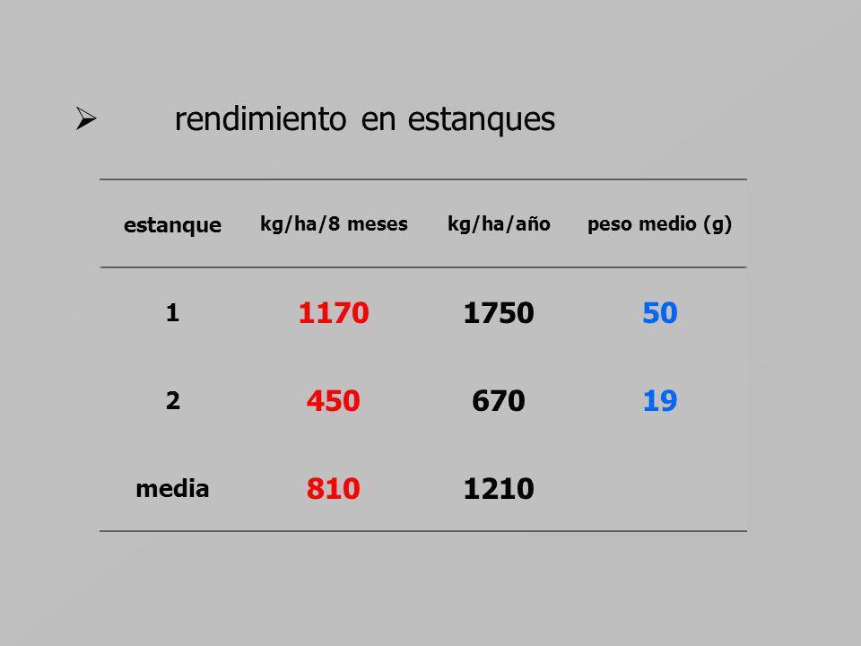 rendimiento en estanques estanque kg/ha/8 meseskg/ha/añopeso medio (g) 1 1170175050 2 45067019 media 8101210