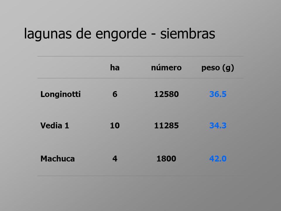 lagunas de engorde - siembras hanúmeropeso (g) Longinotti61258036.5 Vedia 1101128534.3 Machuca4180042.0
