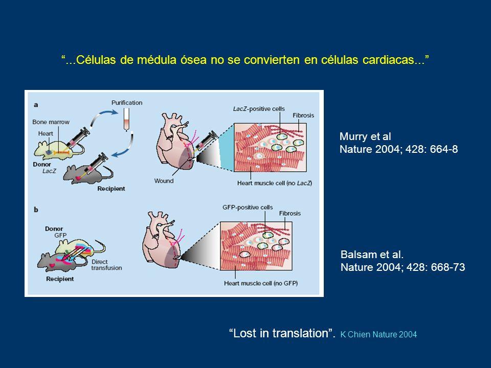Murry et al Nature 2004; 428: 664-8 Balsam et al. Nature 2004; 428: 668-73...Células de médula ósea no se convierten en células cardiacas... Lost in t