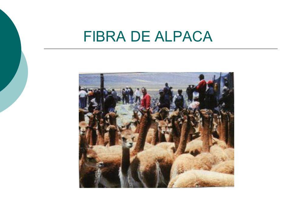 FIBRA DE ALPACA