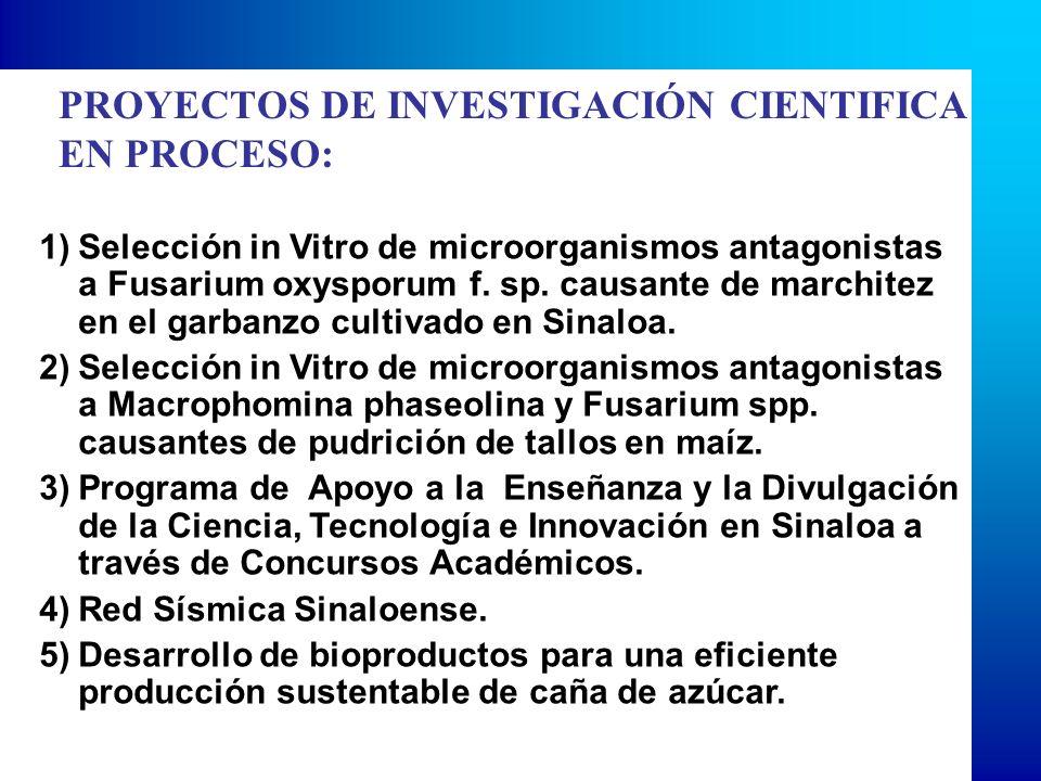 PROYECTOS DE INVESTIGACIÓN CIENTIFICA EN PROCESO: 1)Selección in Vitro de microorganismos antagonistas a Fusarium oxysporum f. sp. causante de marchit