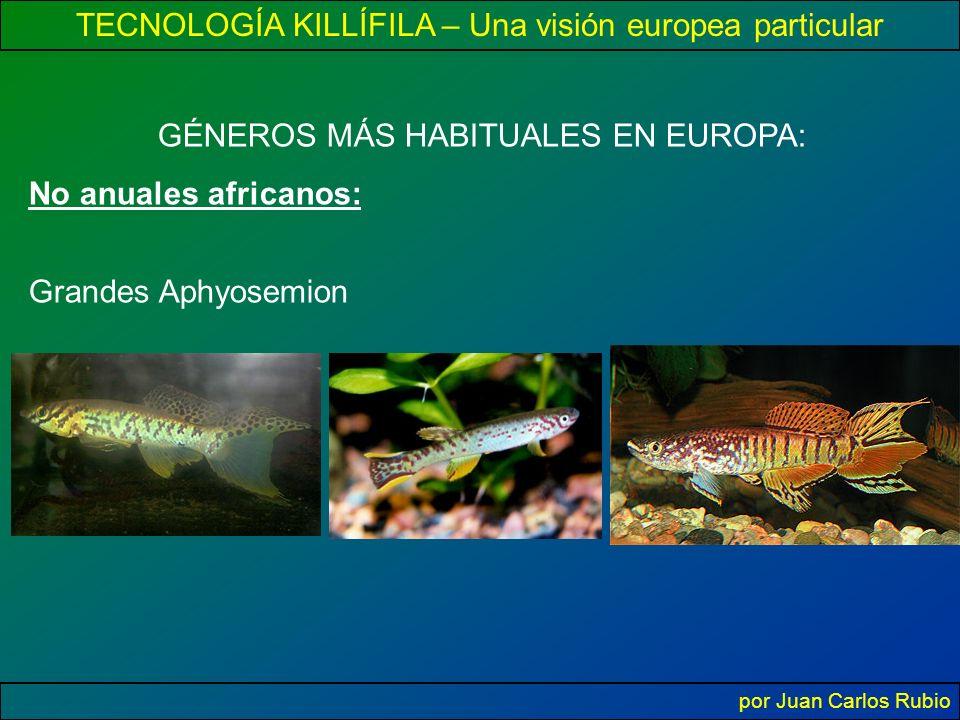 TECNOLOGÍA KILLÍFILA – Una visión europea particular por Juan Carlos Rubio GÉNEROS MÁS HABITUALES EN EUROPA: No anuales africanos: Grandes Aphyosemion