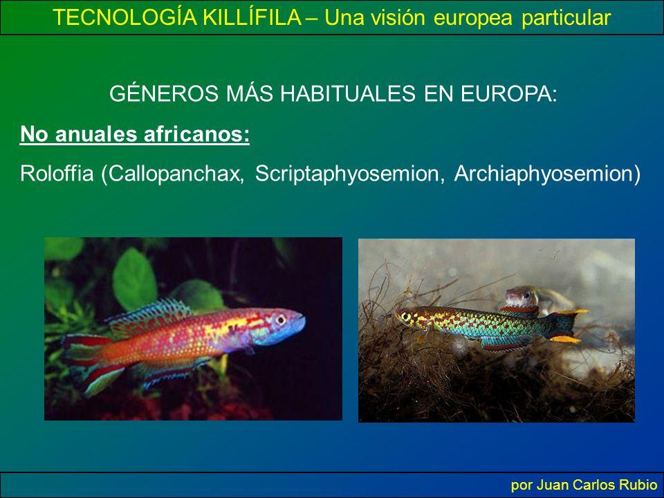 TECNOLOGÍA KILLÍFILA – Una visión europea particular por Juan Carlos Rubio GÉNEROS MÁS HABITUALES EN EUROPA: No anuales africanos: Roloffia (Callopanchax, Scriptaphyosemion, Archiaphyosemion)