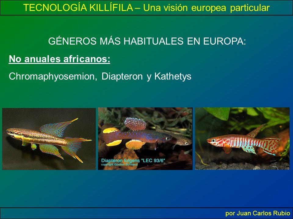 TECNOLOGÍA KILLÍFILA – Una visión europea particular por Juan Carlos Rubio GÉNEROS MÁS HABITUALES EN EUROPA: No anuales africanos: Chromaphyosemion, Diapteron y Kathetys