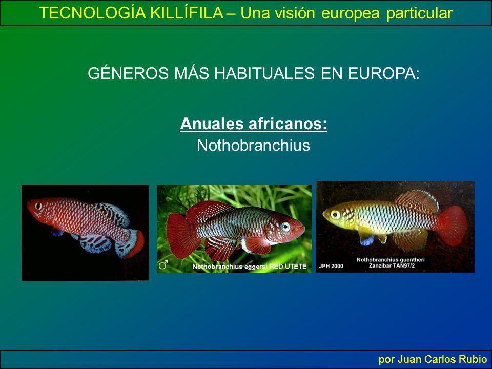 TECNOLOGÍA KILLÍFILA – Una visión europea particular por Juan Carlos Rubio GÉNEROS MÁS HABITUALES EN EUROPA: Anuales africanos: Nothobranchius