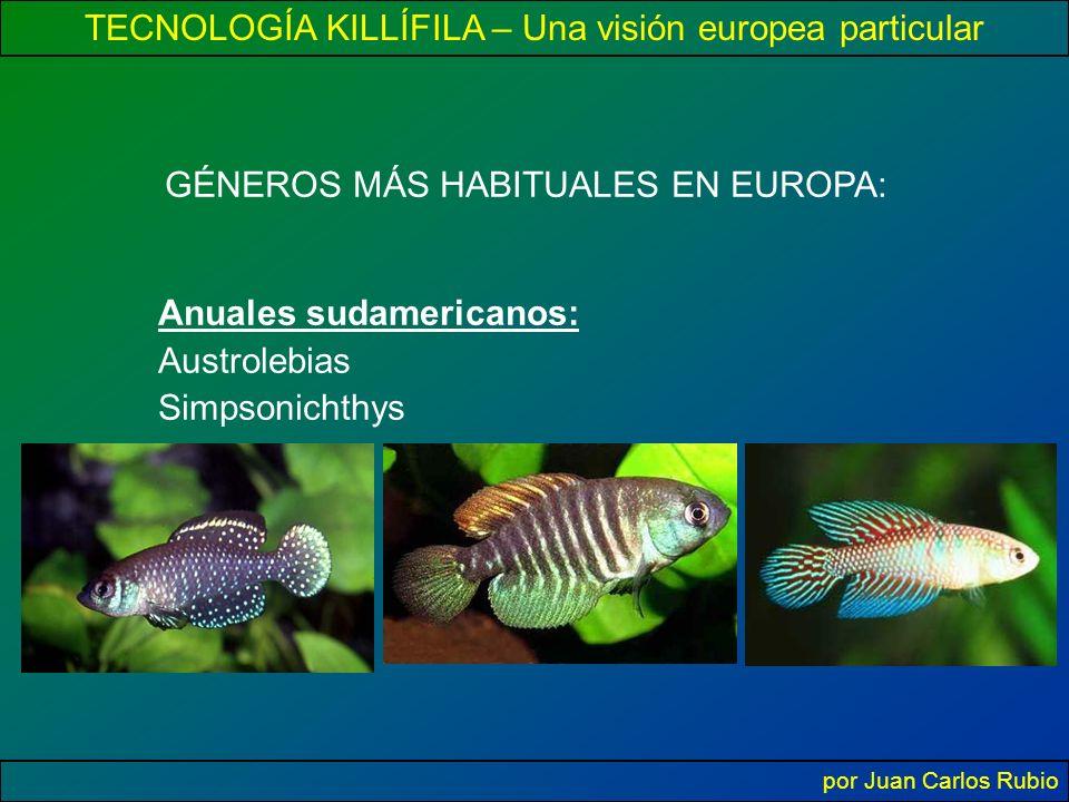 TECNOLOGÍA KILLÍFILA – Una visión europea particular por Juan Carlos Rubio GÉNEROS MÁS HABITUALES EN EUROPA: Anuales sudamericanos: Austrolebias Simpsonichthys