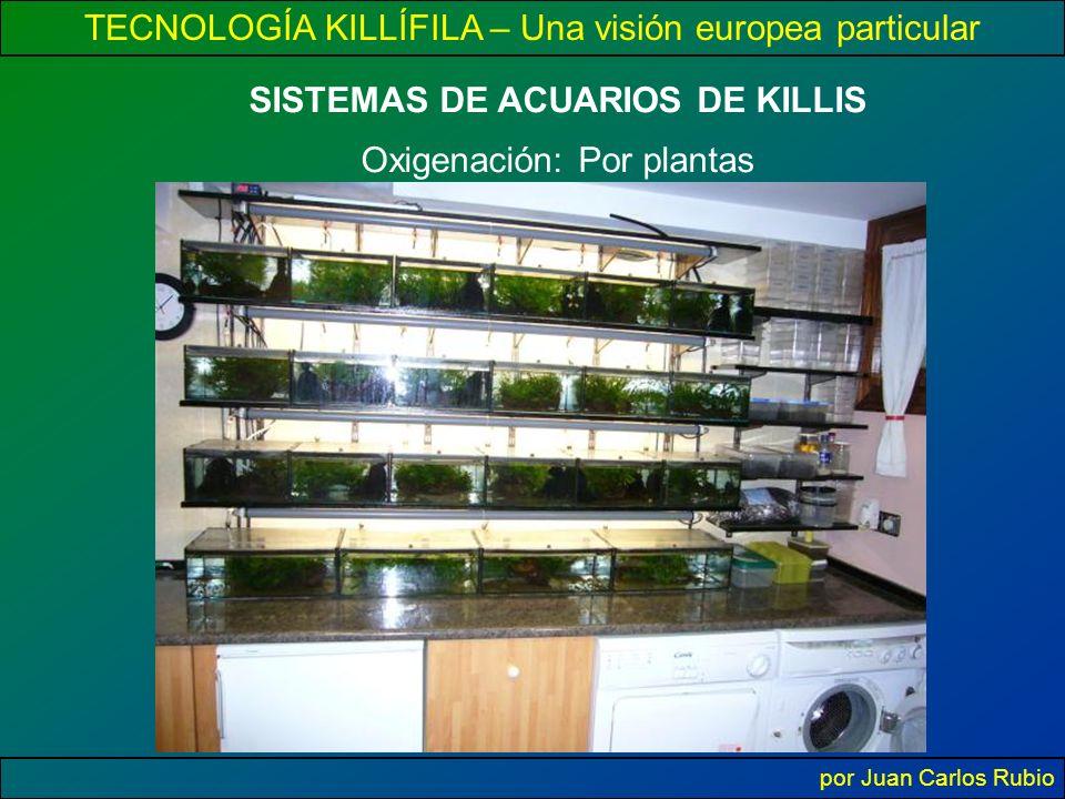 TECNOLOGÍA KILLÍFILA – Una visión europea particular por Juan Carlos Rubio SISTEMAS DE ACUARIOS DE KILLIS Oxigenación: Por plantas
