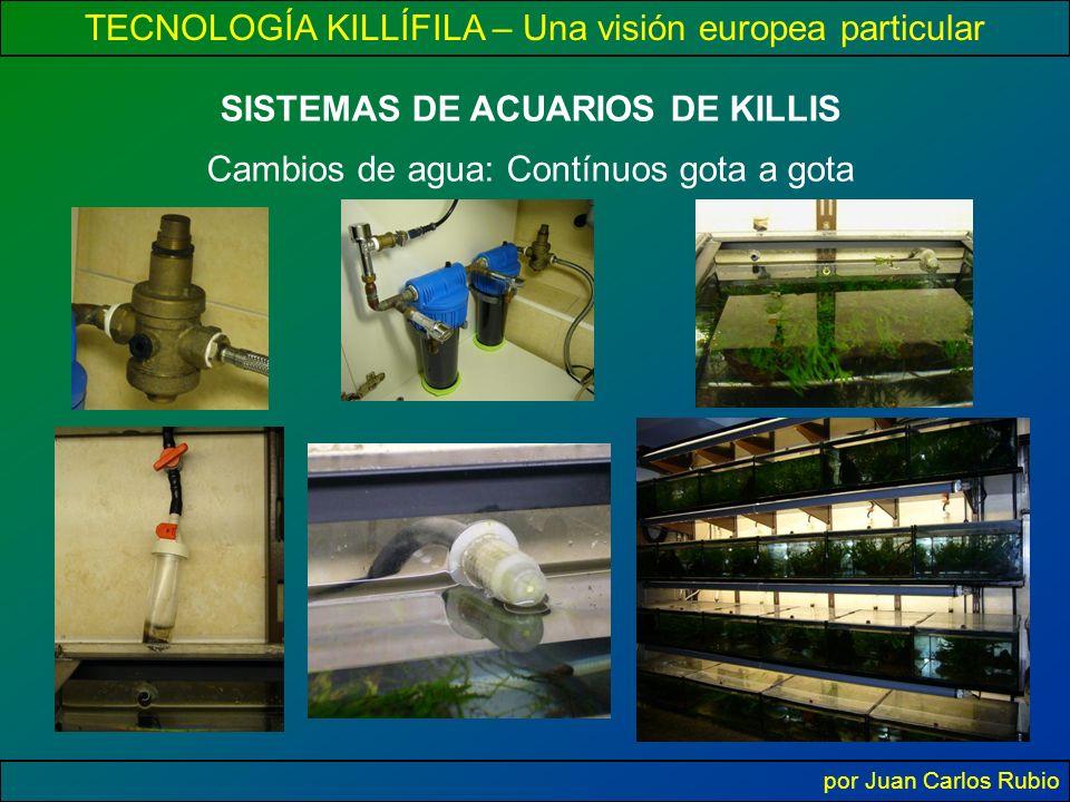 TECNOLOGÍA KILLÍFILA – Una visión europea particular por Juan Carlos Rubio SISTEMAS DE ACUARIOS DE KILLIS Cambios de agua: Contínuos gota a gota