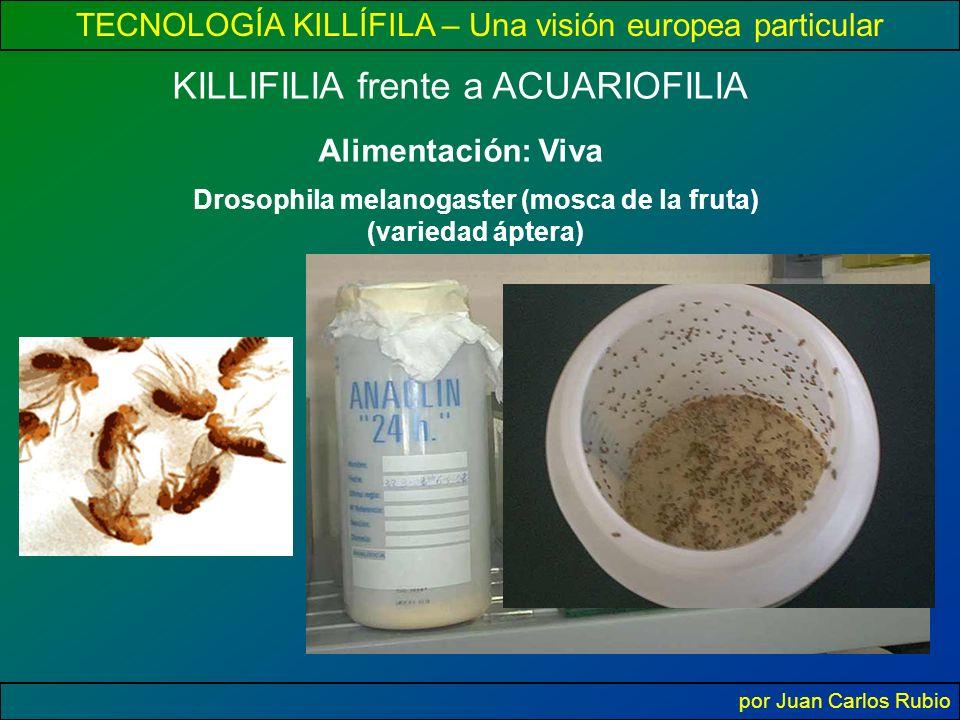 TECNOLOGÍA KILLÍFILA – Una visión europea particular por Juan Carlos Rubio Alimentación: Viva KILLIFILIA frente a ACUARIOFILIA Drosophila melanogaster (mosca de la fruta) (variedad áptera)