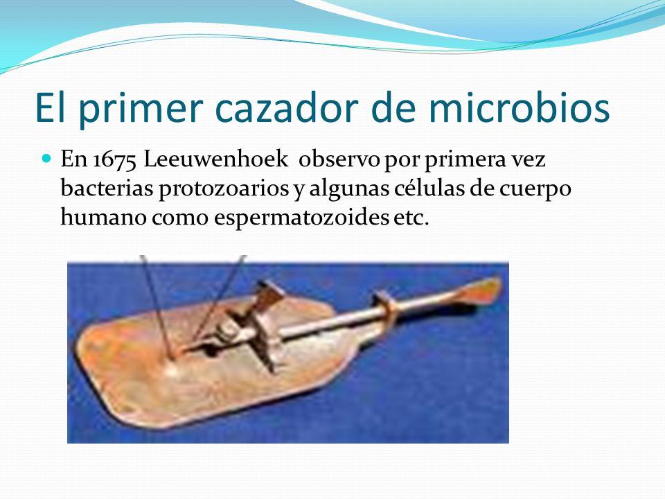El primer cazador de microbios En 1675 Leeuwenhoek observo por primera vez bacterias protozoarios y algunas células de cuerpo humano como espermatozoi