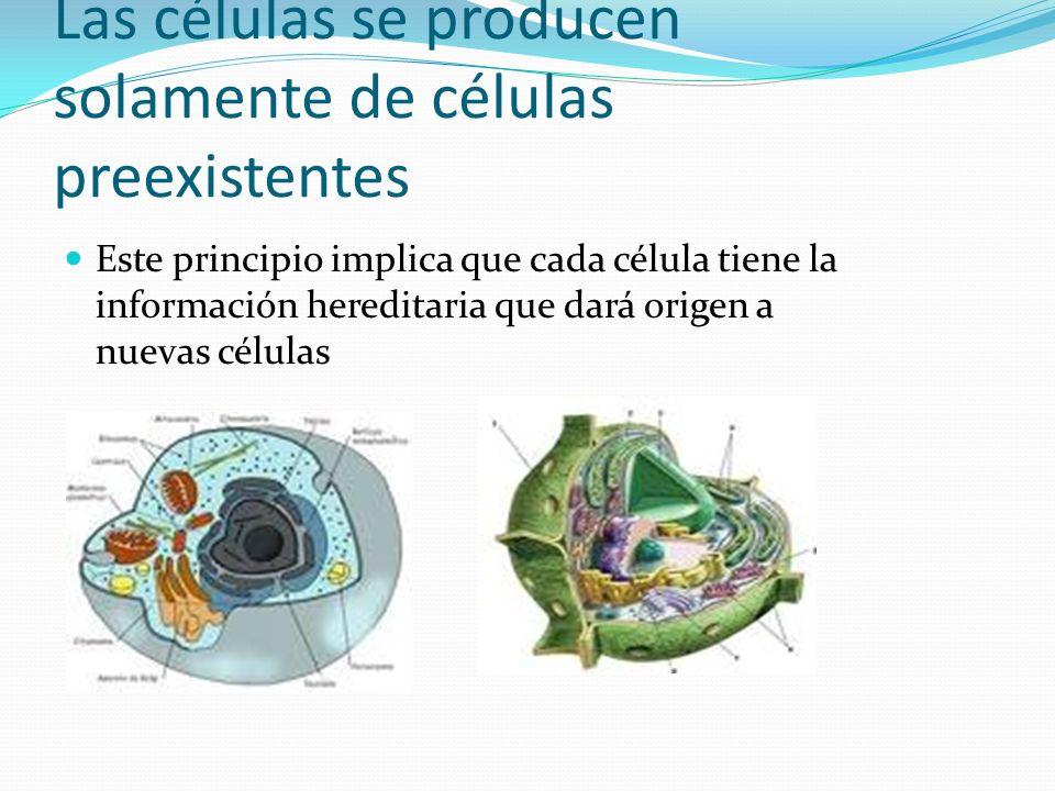 Las células se producen solamente de células preexistentes Este principio implica que cada célula tiene la información hereditaria que dará origen a n