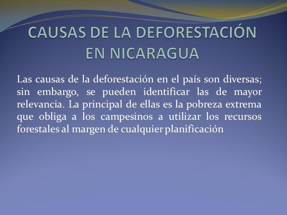 Las causas de la deforestación en el país son diversas; sin embargo, se pueden identificar las de mayor relevancia.
