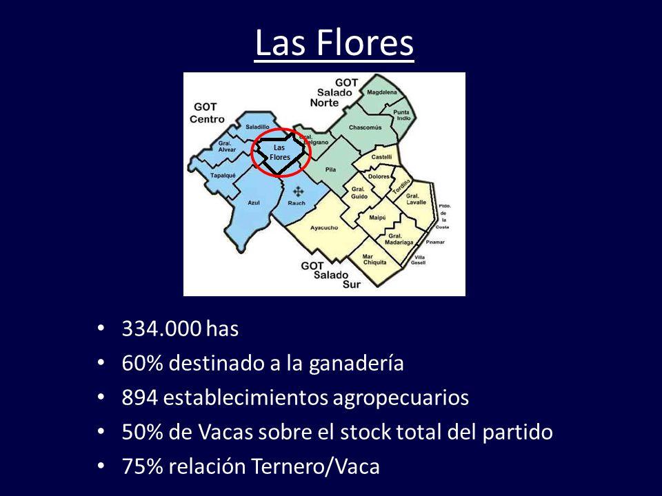 Las Flores 334.000 has 60% destinado a la ganadería 894 establecimientos agropecuarios 50% de Vacas sobre el stock total del partido 75% relación Tern