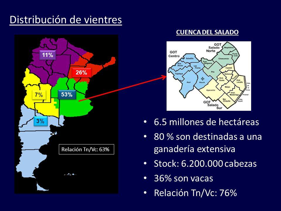 53% 26% 3% 7% 11% Distribución de vientres CUENCA DEL SALADO 6.5 millones de hectáreas 80 % son destinadas a una ganadería extensiva Stock: 6.200.000