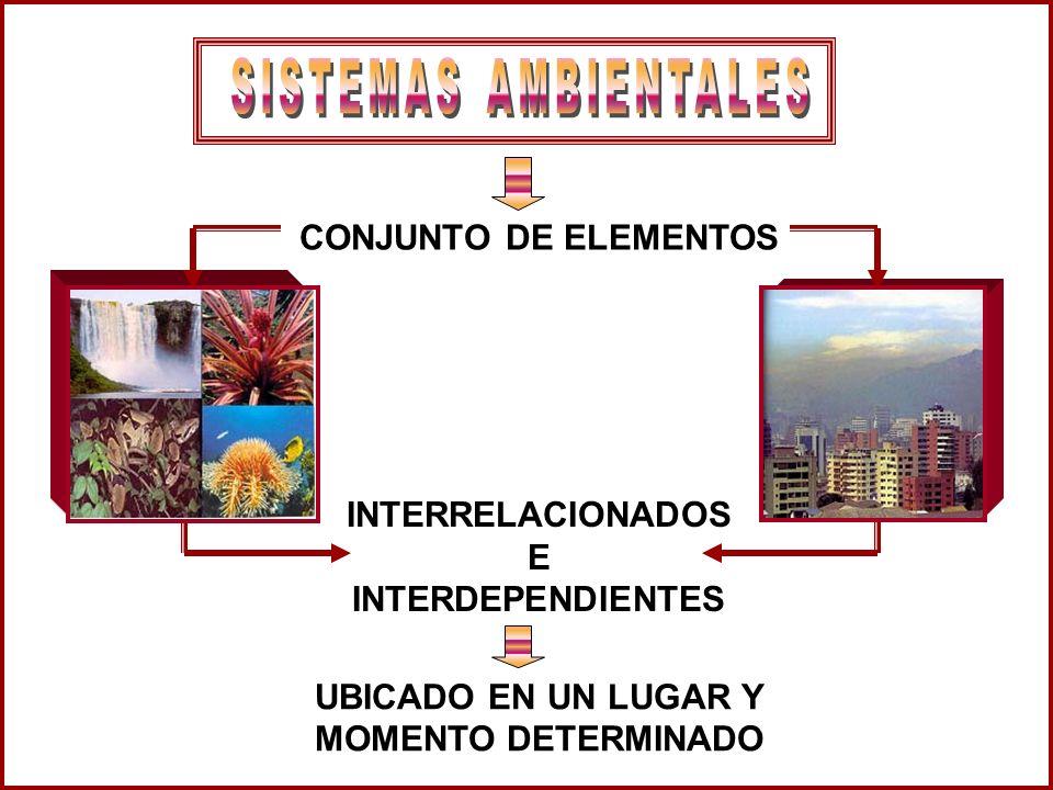 CONJUNTO DE ELEMENTOS INTERRELACIONADOS E INTERDEPENDIENTES UBICADO EN UN LUGAR Y MOMENTO DETERMINADO