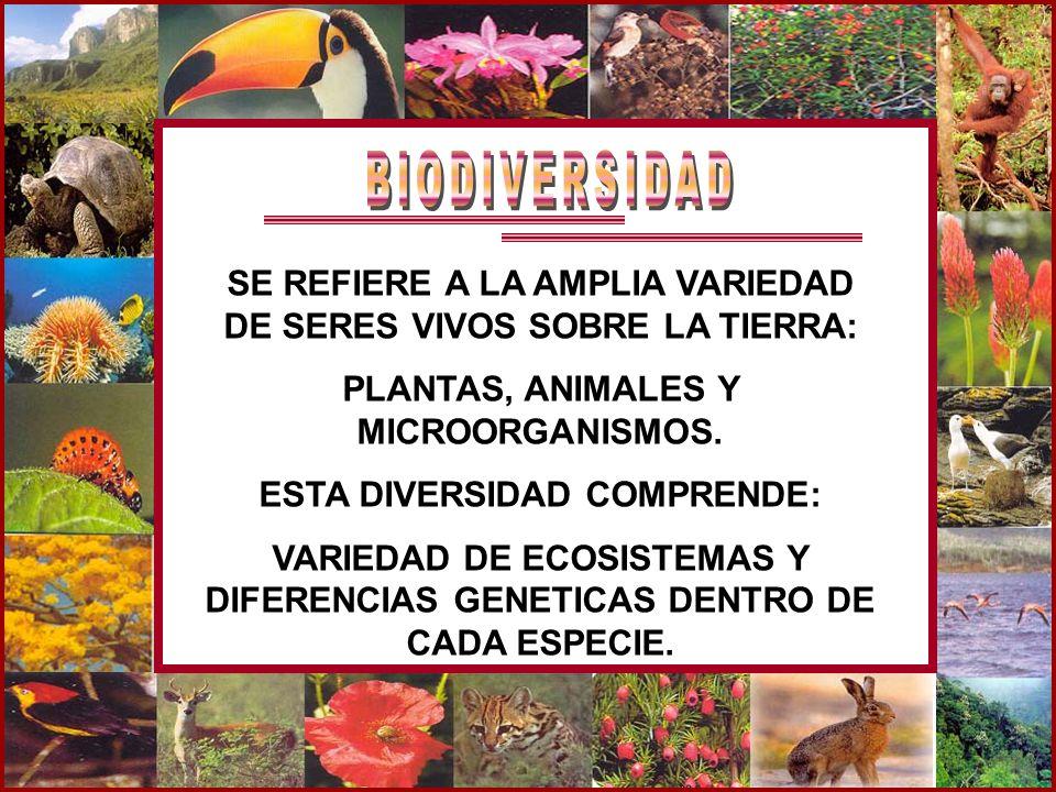 SE REFIERE A LA AMPLIA VARIEDAD DE SERES VIVOS SOBRE LA TIERRA: PLANTAS, ANIMALES Y MICROORGANISMOS. ESTA DIVERSIDAD COMPRENDE: VARIEDAD DE ECOSISTEMA