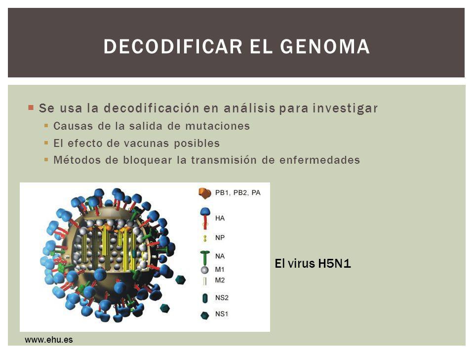 DECODIFICAR EL GENOMA Se usa la decodificación en análisis para investigar Causas de la salida de mutaciones El efecto de vacunas posibles Métodos de