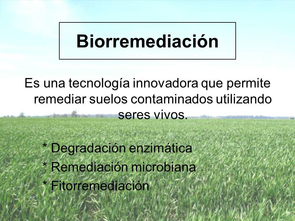 Fitorremediación Es una biotecnología que aprovecha la capacidad de las plantas de absorber y acumular altas concentraciones de contaminantes o convertirlos en especies químicas menos tóxicas permitiendo reducir su concentración o eliminarlos del suelo.
