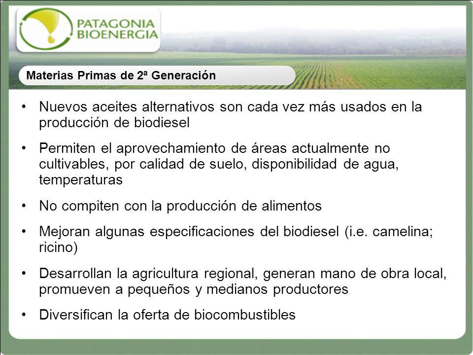 Nuevos aceites alternativos son cada vez más usados en la producción de biodiesel Permiten el aprovechamiento de áreas actualmente no cultivables, por