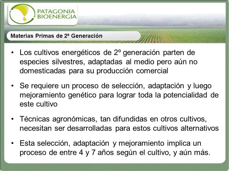 Los cultivos energéticos de 2º generación parten de especies silvestres, adaptadas al medio pero aún no domesticadas para su producción comercial Se r