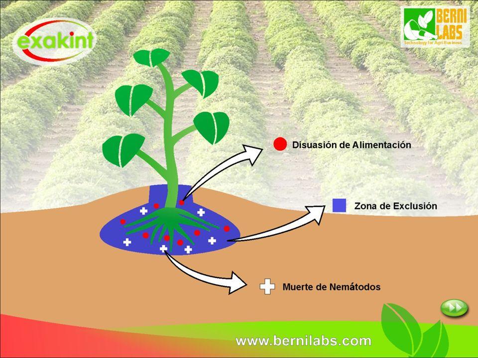 dosificación y costo *Se sugiere un tratamiento en transplante y una aplicación por dilución al 1 % en plantas de vivero.