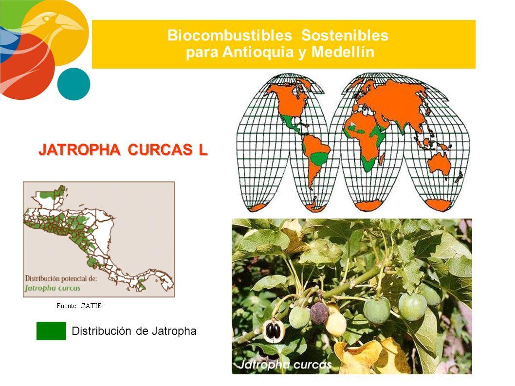 Parque Tecnológico de Antioquia S.A./ Plan Estratégico 2007-2010 Biocombustibles Sostenibles para Antioquia y Colombia