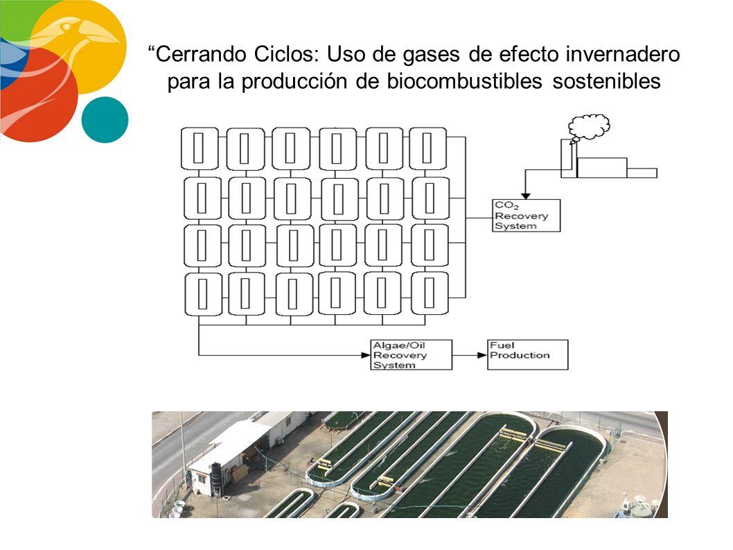 PRODUCCION DE BIOCOMBUSTIBLES A PARTIR DE MICROALGAS