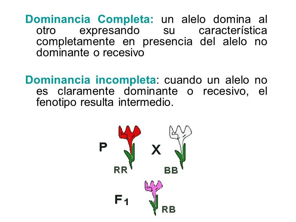 Dominancia Completa: un alelo domina al otro expresando su característica completamente en presencia del alelo no dominante o recesivo Dominancia inco
