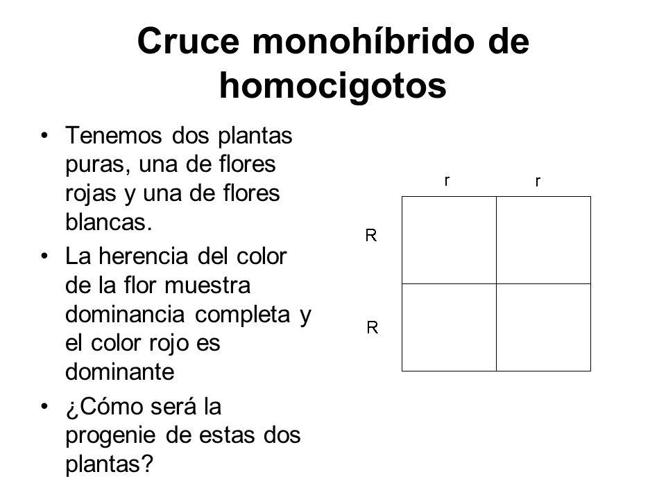 Cruce monohíbrido de homocigotos Tenemos dos plantas puras, una de flores rojas y una de flores blancas. La herencia del color de la flor muestra domi