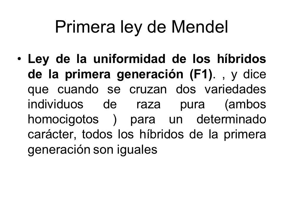 Primera ley de Mendel Ley de la uniformidad de los híbridos de la primera generación (F1)., y dice que cuando se cruzan dos variedades individuos de r
