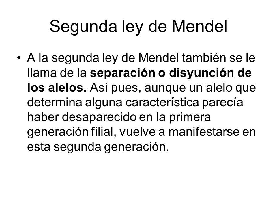 Segunda ley de Mendel A la segunda ley de Mendel también se le llama de la separación o disyunción de los alelos. Así pues, aunque un alelo que determ