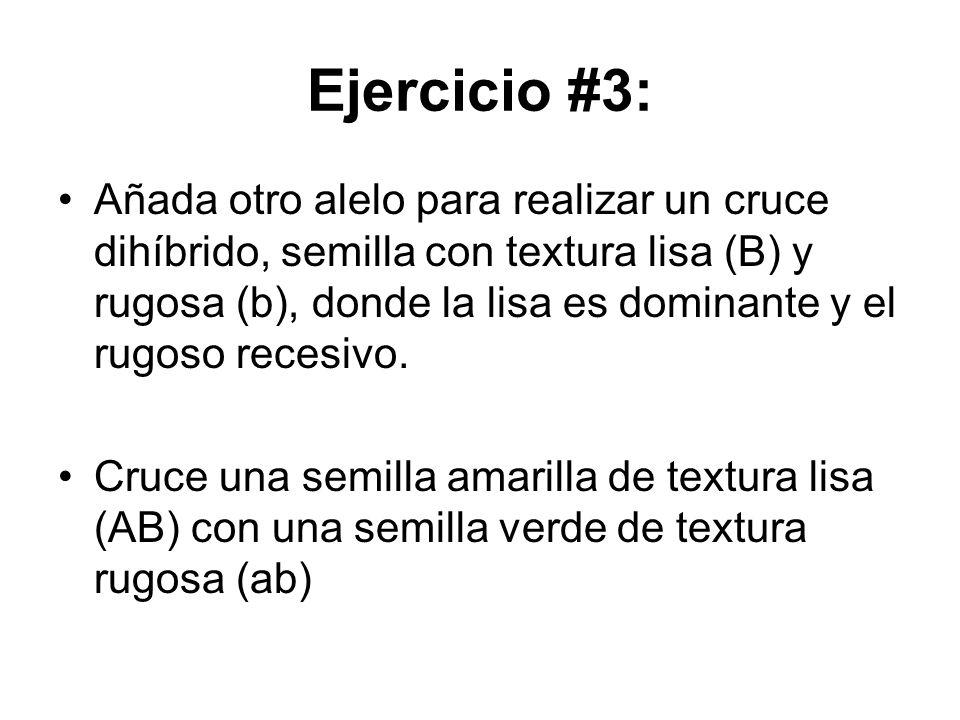 Ejercicio #3: Añada otro alelo para realizar un cruce dihíbrido, semilla con textura lisa (B) y rugosa (b), donde la lisa es dominante y el rugoso rec