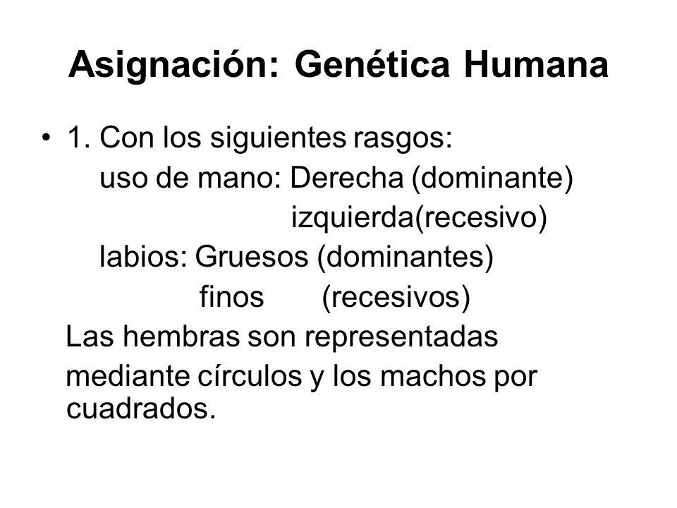 Asignación: Genética Humana 1. Con los siguientes rasgos: uso de mano: Derecha (dominante) izquierda(recesivo) labios: Gruesos (dominantes) finos (rec