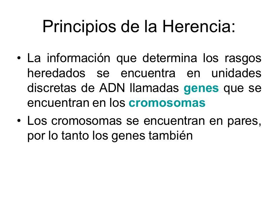 Principios de la Herencia: La información que determina los rasgos heredados se encuentra en unidades discretas de ADN llamadas genes que se encuentra