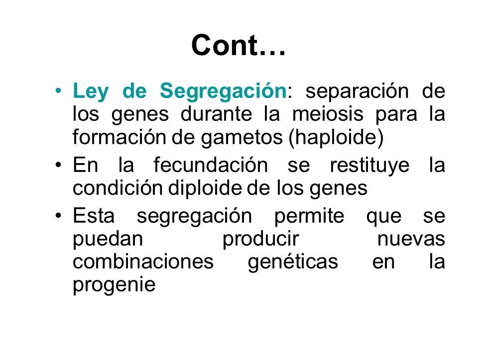 Cont… Ley de Segregación: separación de los genes durante la meiosis para la formación de gametos (haploide) En la fecundación se restituye la condici