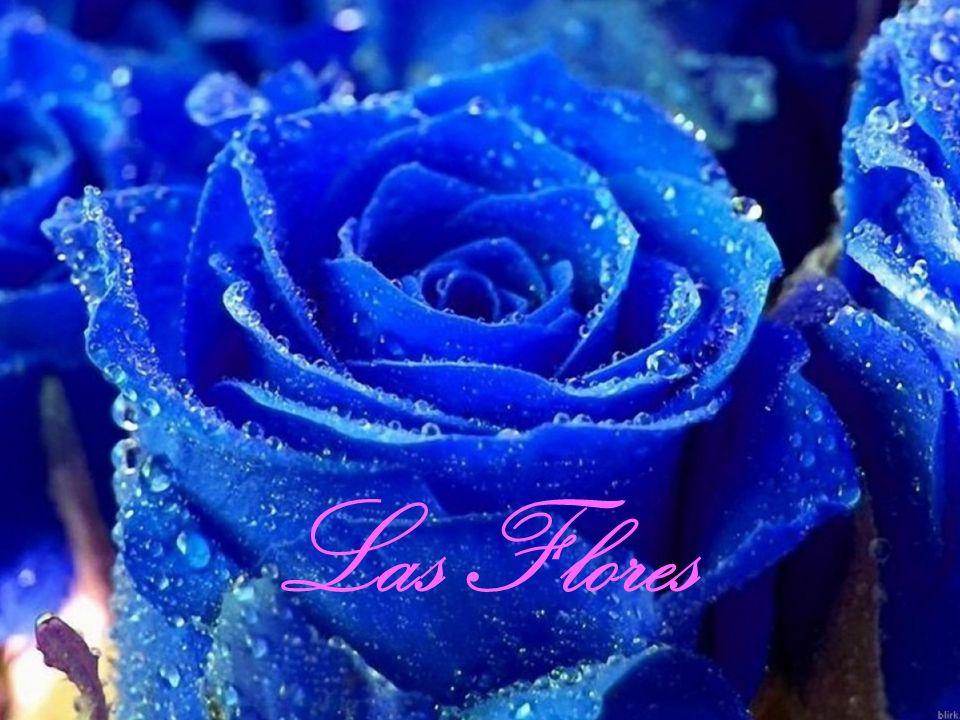 Las FloresSignificados Las Flores