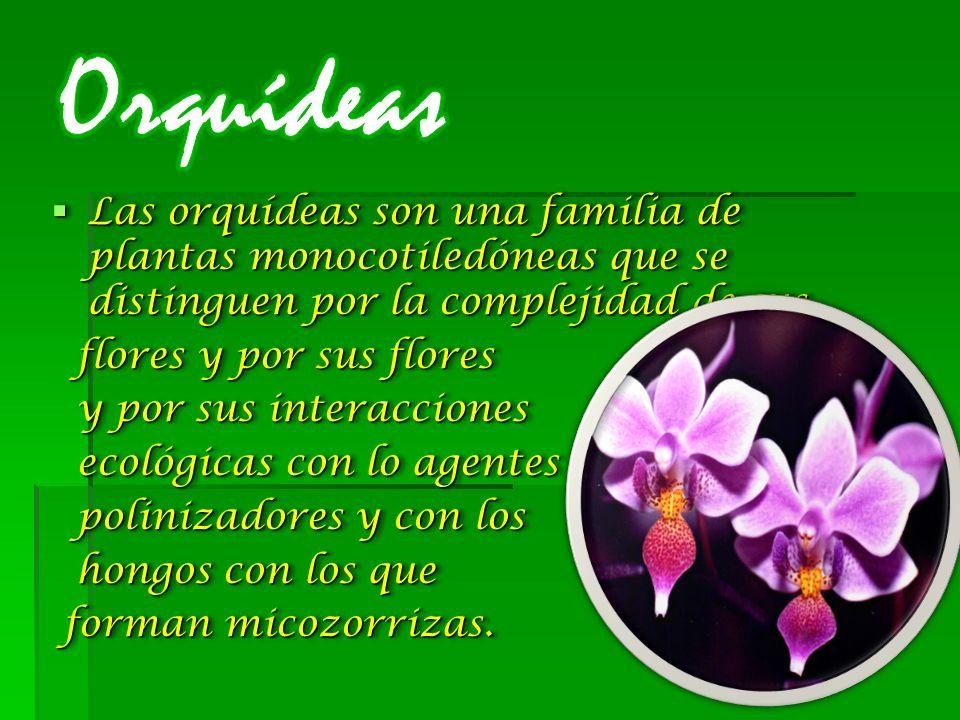 Las orquídeas son una familia de plantas monocotiledóneas que se distinguen por la complejidad de sus Las orquídeas son una familia de plantas monocotiledóneas que se distinguen por la complejidad de sus flores y por sus flores flores y por sus flores y por sus interacciones y por sus interacciones ecológicas con lo agentes ecológicas con lo agentes polinizadores y con los polinizadores y con los hongos con los que hongos con los que forman micozorrizas.